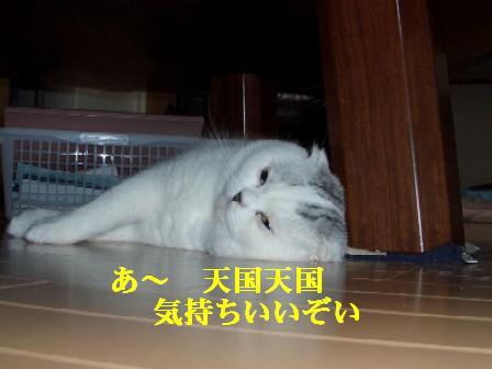 ねこ12月01日(土) 015