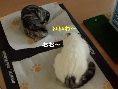 ねこ12月05日(水)他 003