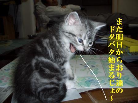 ねこ12月05日(水) 028