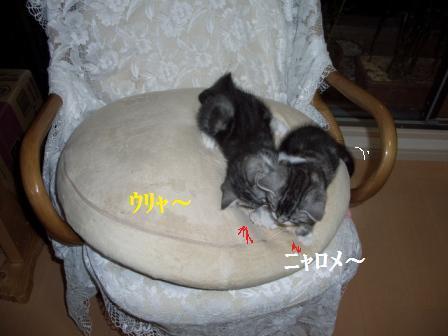 猫12月12日(水) 044