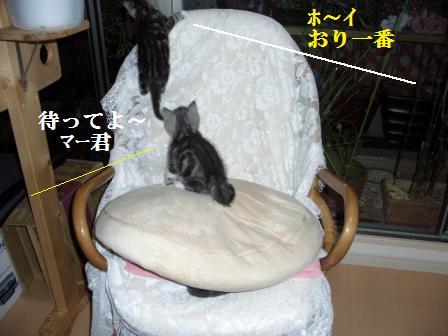猫12月12日(水) 045