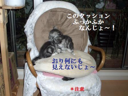 猫12月12日(水) 040