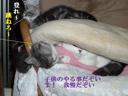 猫12月12日(水) 039