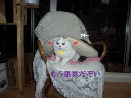 猫12月12日(水) 046
