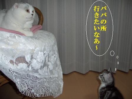 ねこ12月13日(木) 004