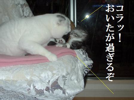 ねこ12月15日(土) 001