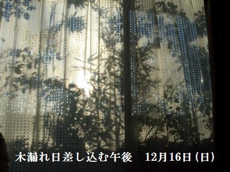 ねこ12月17日(月) 004