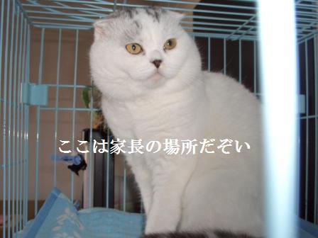 ねこ12月21日(金) 030