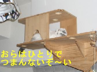 CIMG3672.jpg