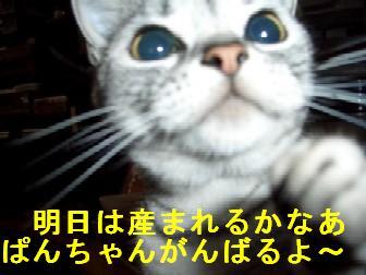 CIMG3681.jpg