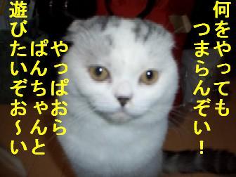 CIMG3688.jpg