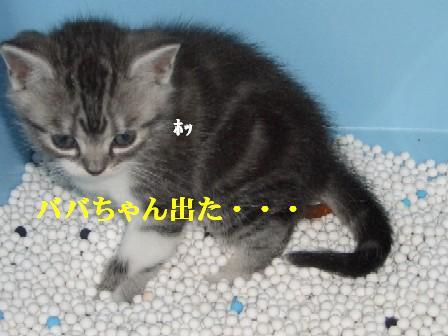 CIMG7690.jpg