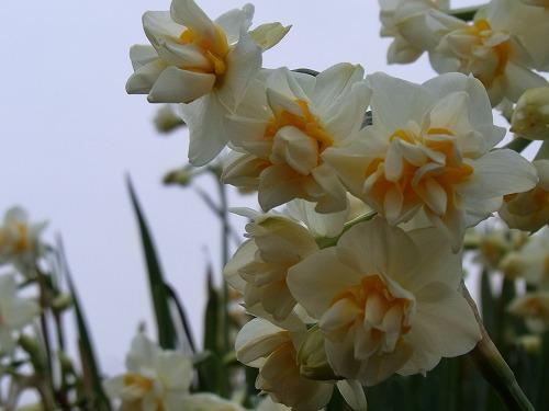 唐音すいせん2011 024