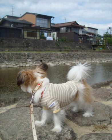 宮川沿いの景色