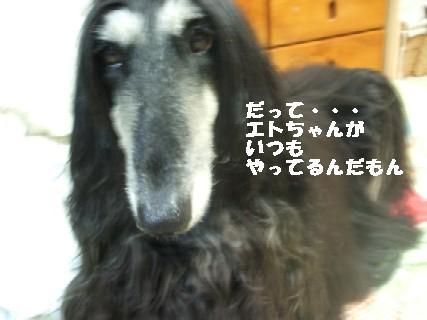 2009_10280156.jpg