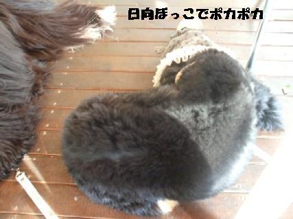 2009_11090009.jpg