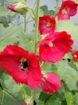お花の中の蜂