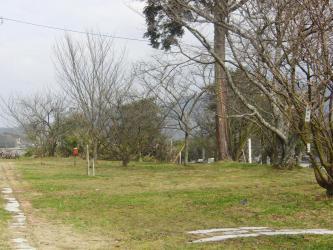 ⑧宗堂桜2