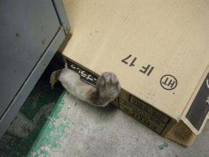 CAT05_convert_20091028020911.jpg