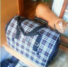 吾輩のマイバッグ
