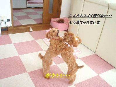 PA071430.jpg