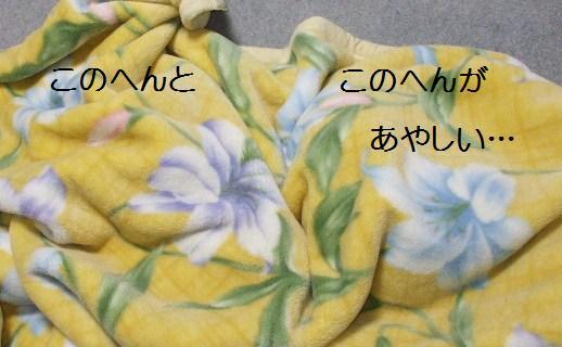 毛布の下は