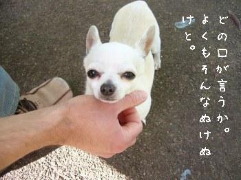 s-P1180649.jpg