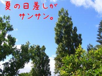 s-P1190688.jpg
