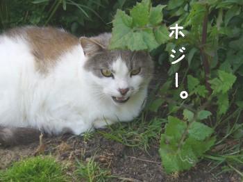 s-P1190841.jpg
