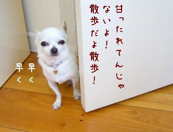 s-P1200023.jpg