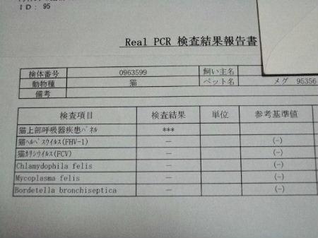 めぐPCR検査