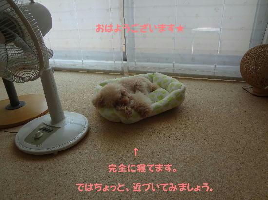 DSC02295_20110925215919.jpg