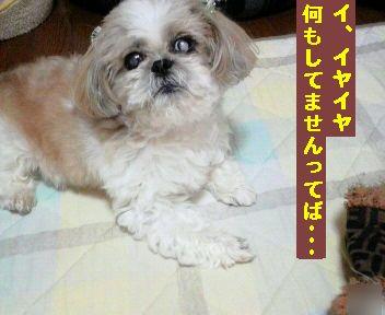 2011092311320000.jpg