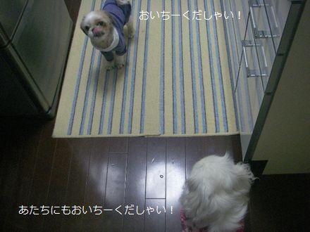 IMGP0029_3.jpg