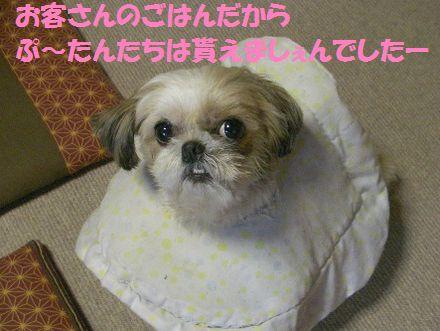 IMGP0098_5.jpg