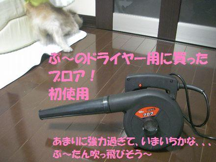 IMGP0118_3.jpg