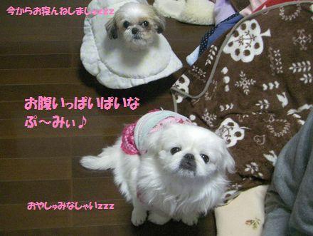 IMGP0154_3.jpg