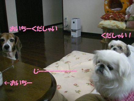 IMGP0162_3.jpg