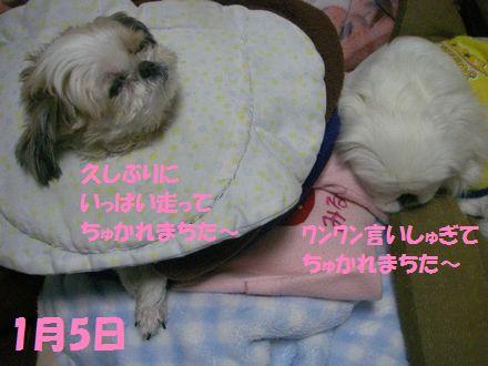 IMGP0164_3.jpg