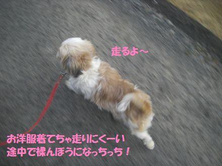 IMGP0169_5.jpg