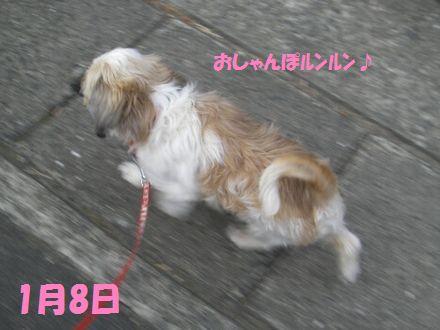 IMGP0231_3_20120108192241.jpg