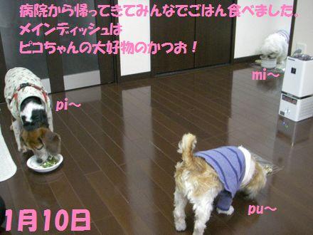 IMGP0246_3.jpg