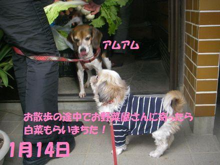 IMGP0279_3_20120114234702.jpg