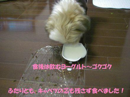 IMGP0336_3.jpg