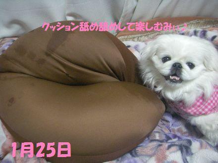 IMGP0392_3.jpg