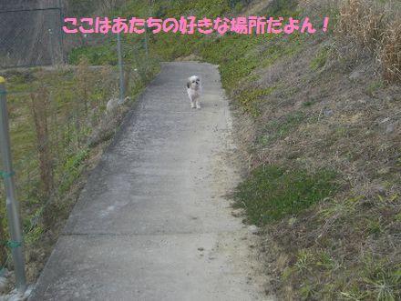 IMGP0408_3.jpg