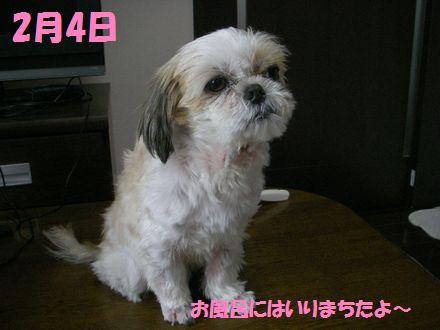 IMGP0454_7.jpg