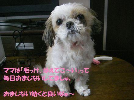 IMGP0456_5.jpg