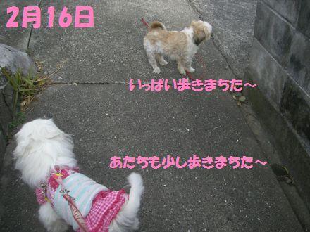 IMGP0531_3.jpg