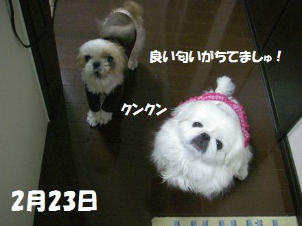IMGP0764_3_20120223224808.jpg